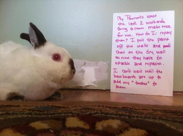 bunny shaming meme (2)