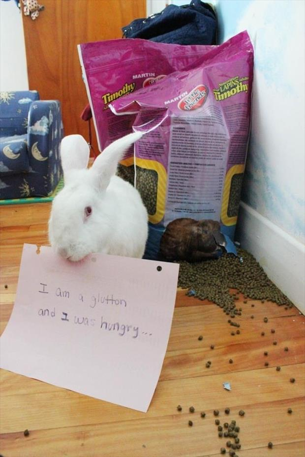 bunny shaming meme (4)