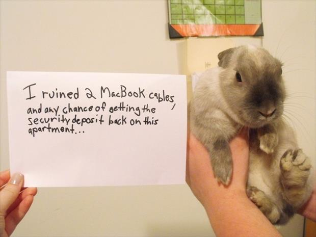 bunny shaming meme (5)