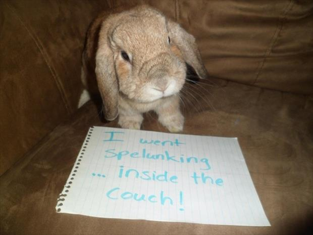 bunny shaming meme (6)