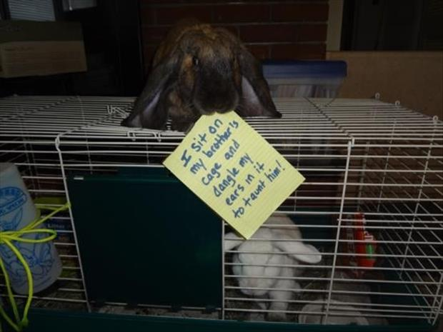 bunny shaming meme (8)