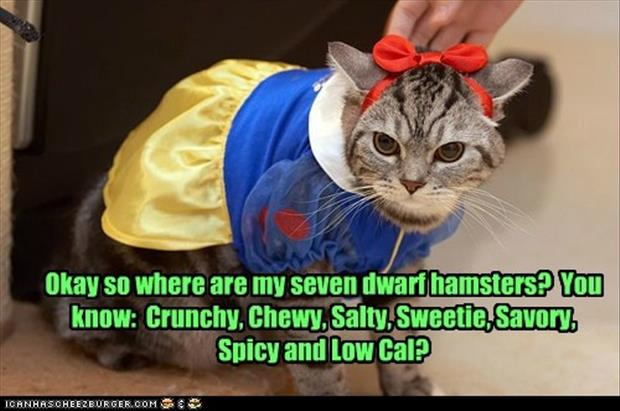 cat dressed up as snow white