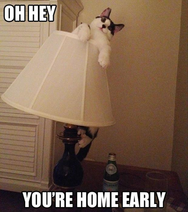 cat in lamp