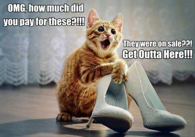 cat loves your shoes