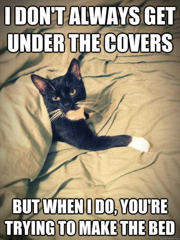 cat playing in the bed covers