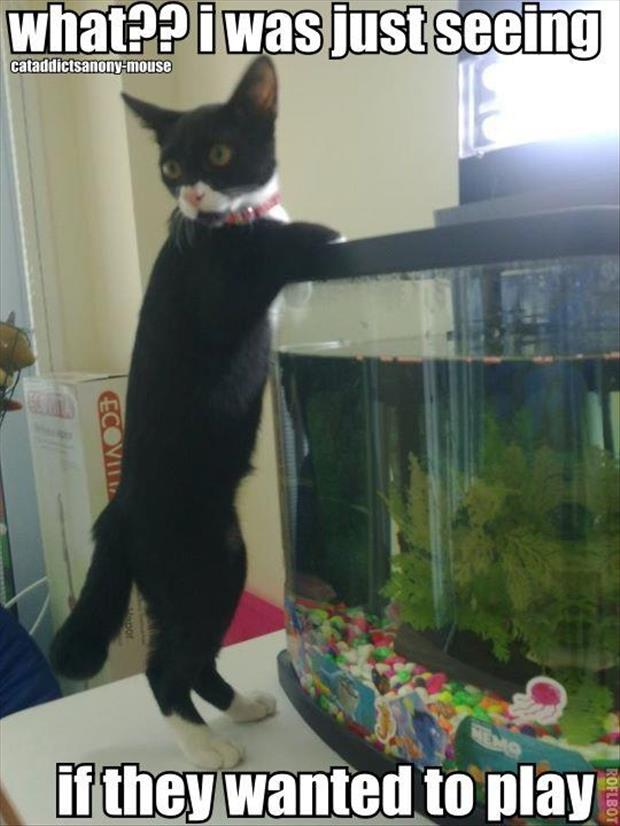 cat playing in the fish tank