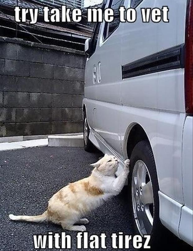 cat sharpens his claws on your tires