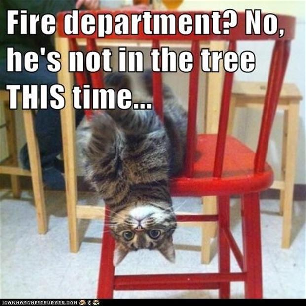 cat stuck in the chair