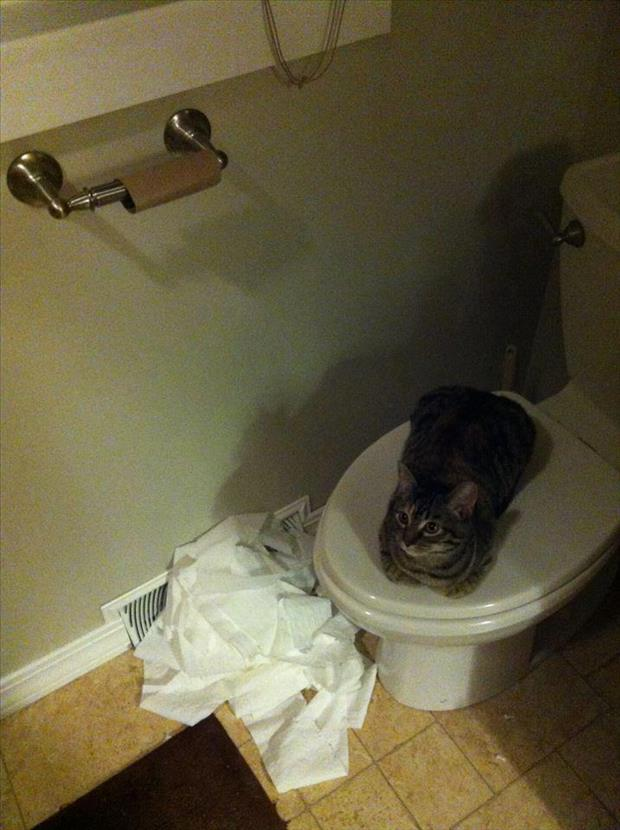 cat unrolls toilet paper