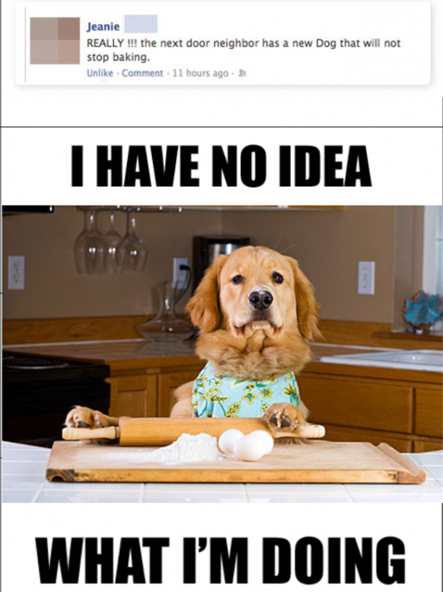 cooking dog has know idea what he's doing