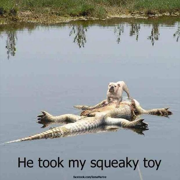 dead alligator took dog's squeaky toy