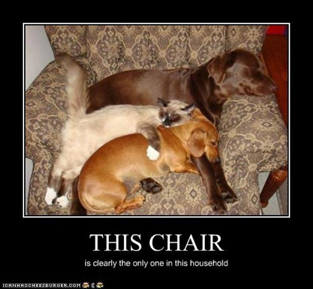 demotivational posters chair for animals