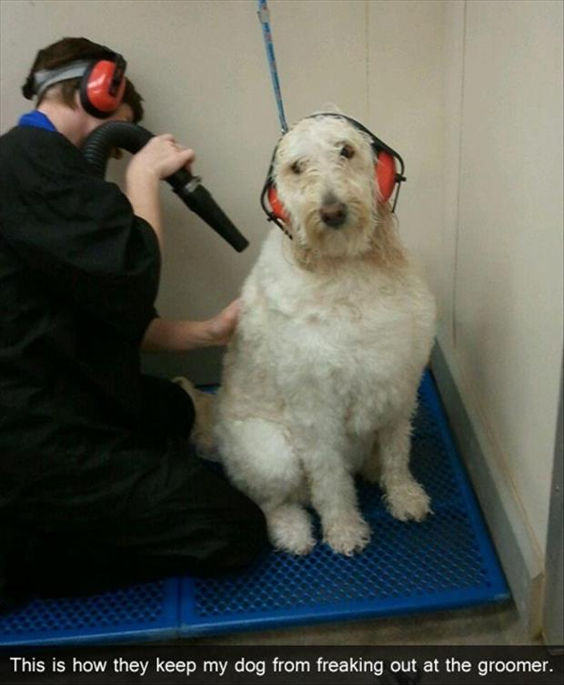 dog at the groomers