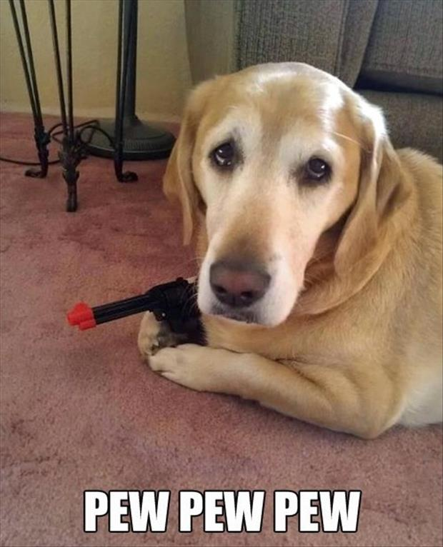 dog has a gun