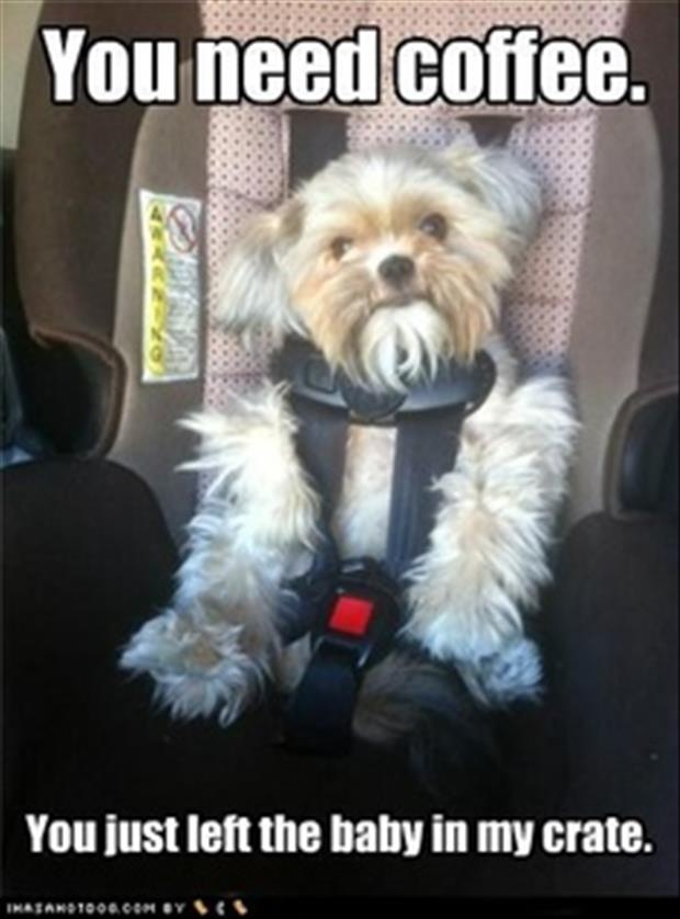 dog in car seat funny pictures