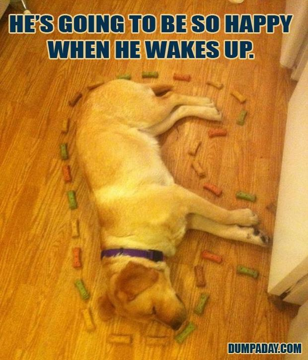 doggy treats funny pictures