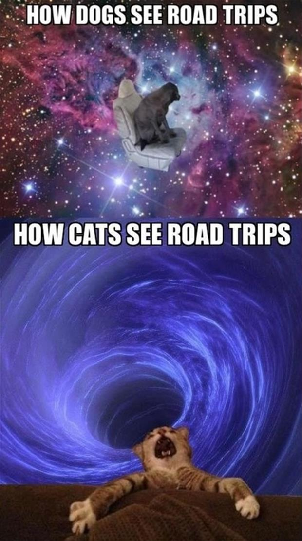 dogs and cats on a road trip