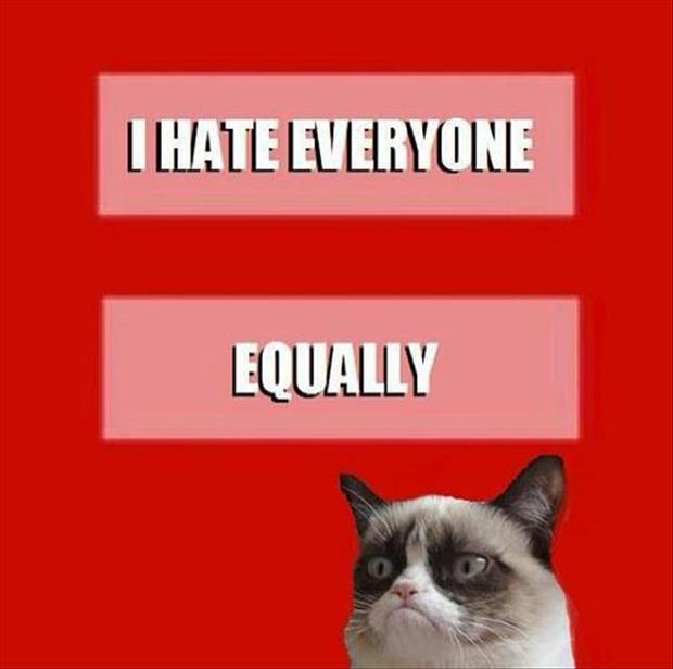 equal rights grumpy cat