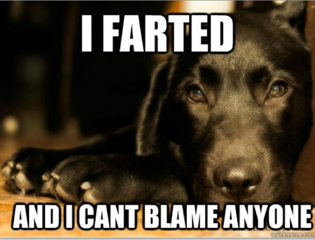 first world dog problems meme (14)