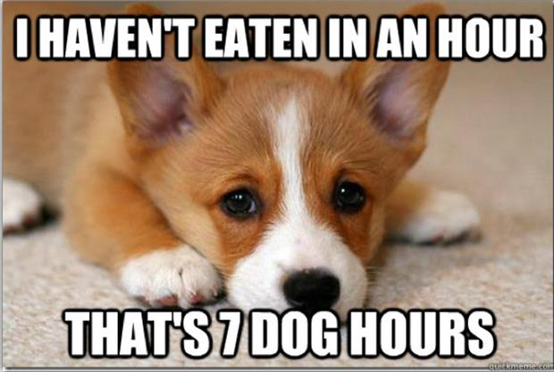 first world dog problems meme (2)