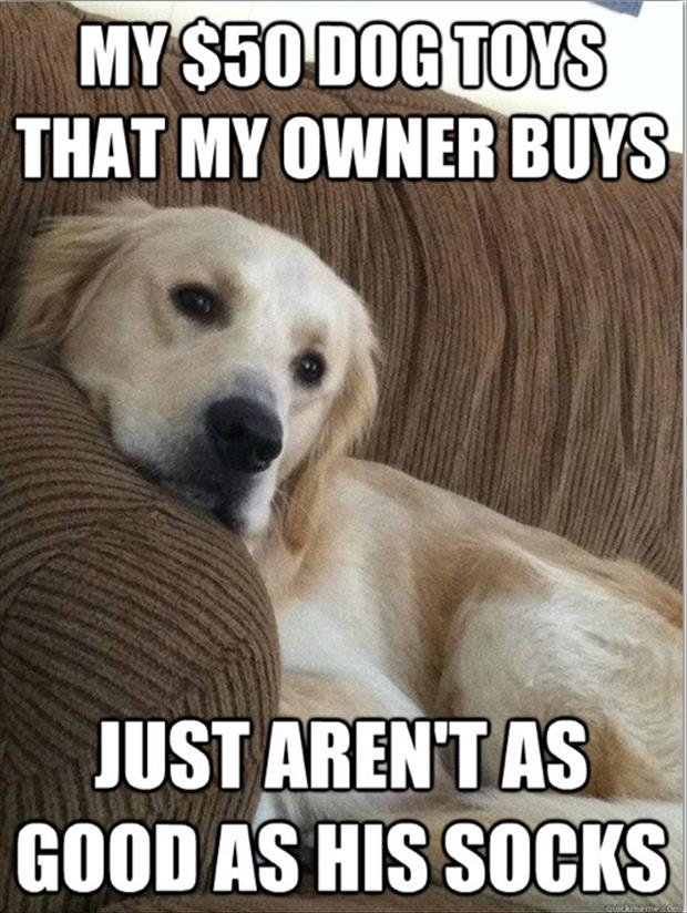 first world dog problems meme (5)