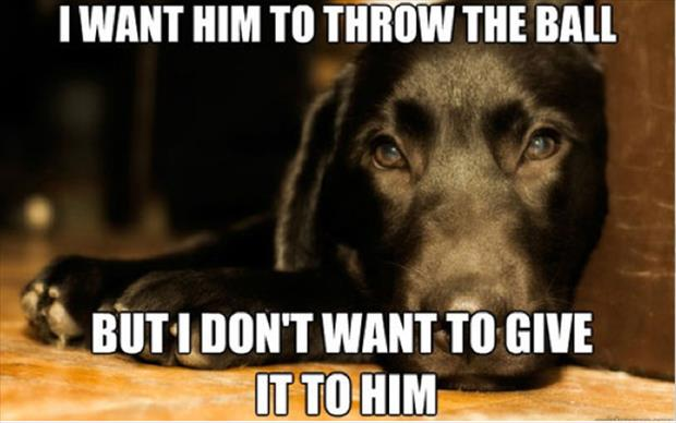 first world dog problems meme (7)