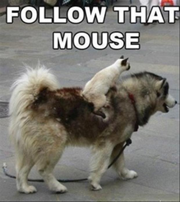 follow that mouse