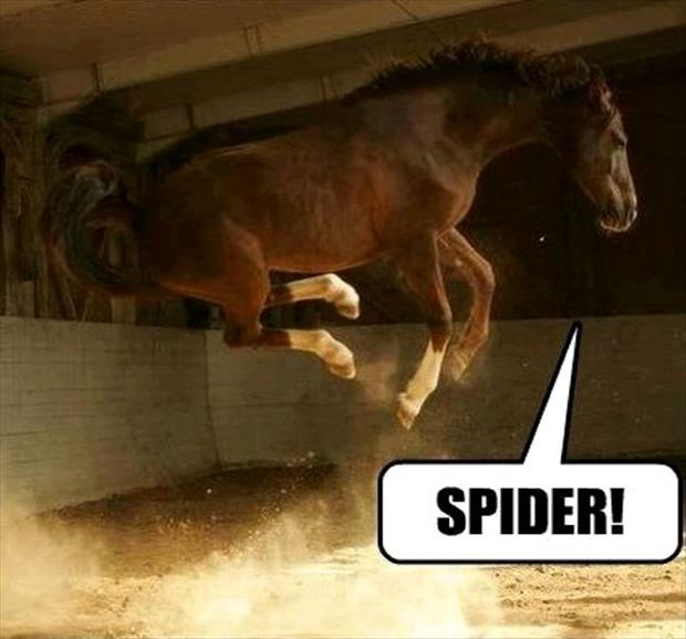 funny animal pictures spiders