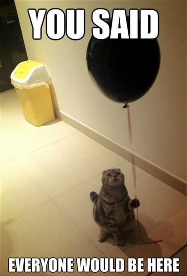 funny birthday party for cat