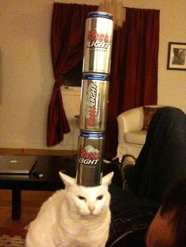 funny cat and beer
