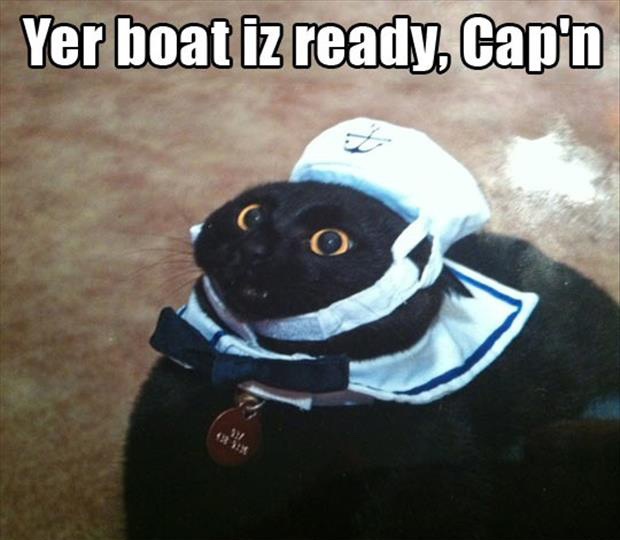 funny cat with a hat