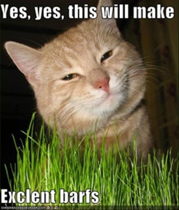 funny cats eating grass