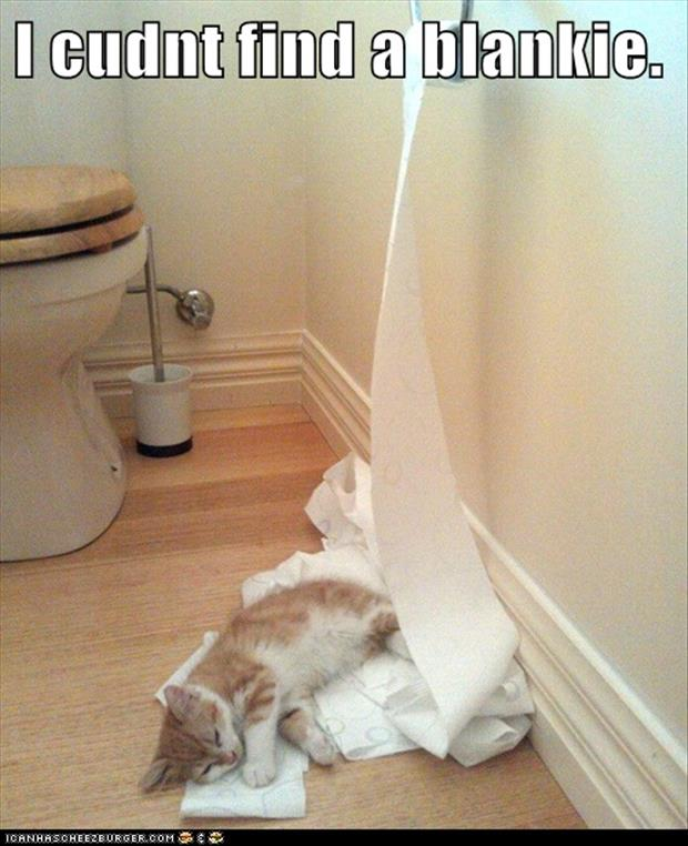 funny cats toilet paper