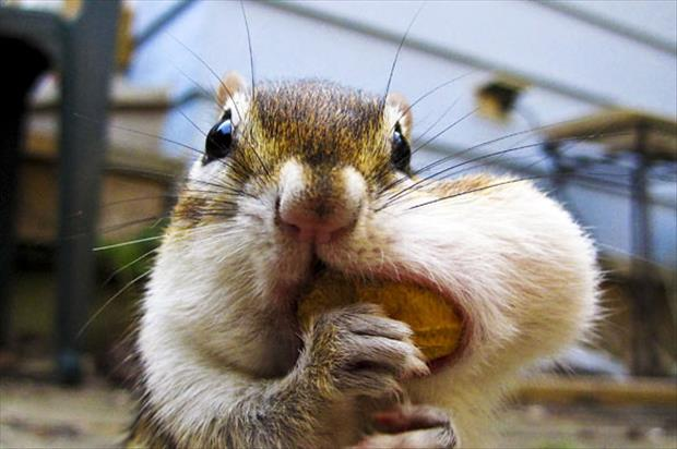 funny chipmonk pictures, dumpaday (1)