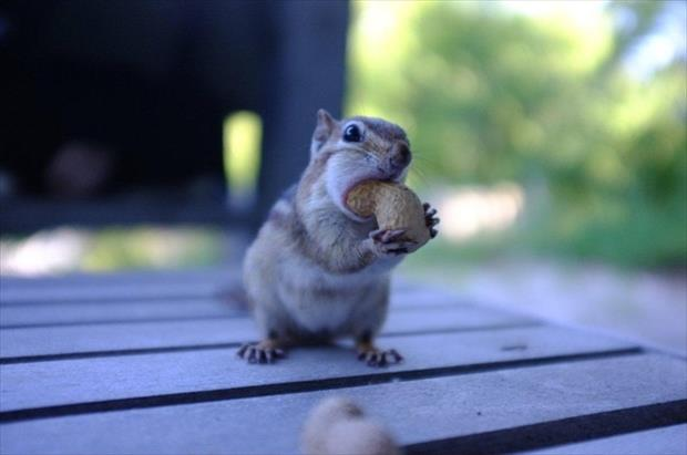 funny chipmonk pictures, dumpaday (11)