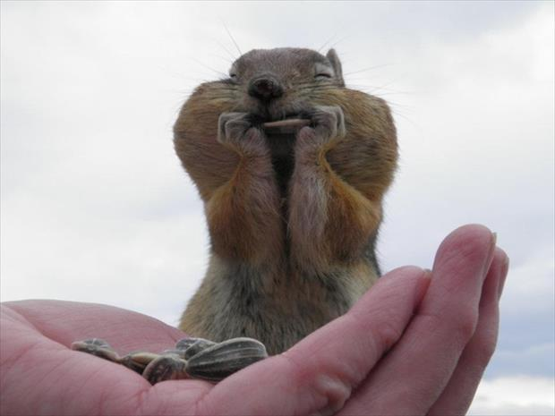 funny chipmonk pictures, dumpaday (12)