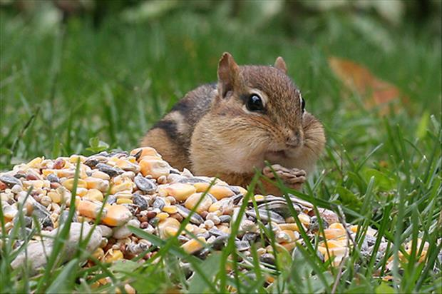 funny chipmonk pictures, dumpaday (4)