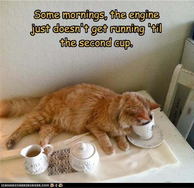 funny coffee in the morning pictures