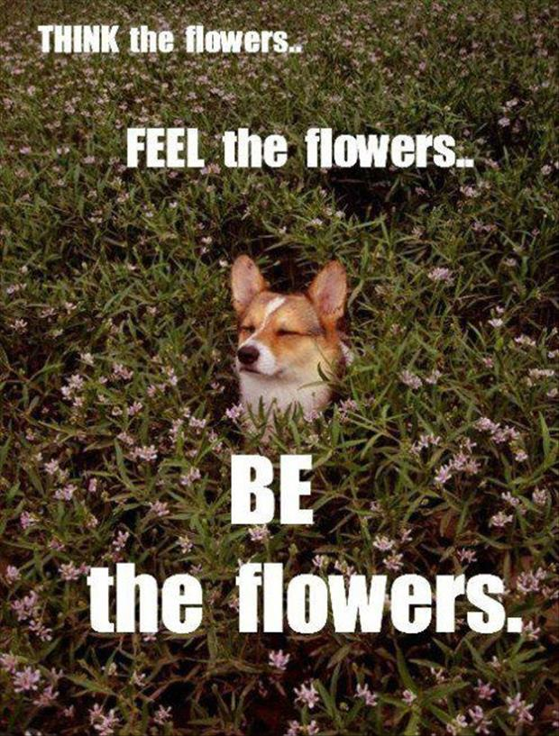 funny dog loves flowers