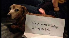 "Funny ""Dog Shaming"" – 28 Pics"
