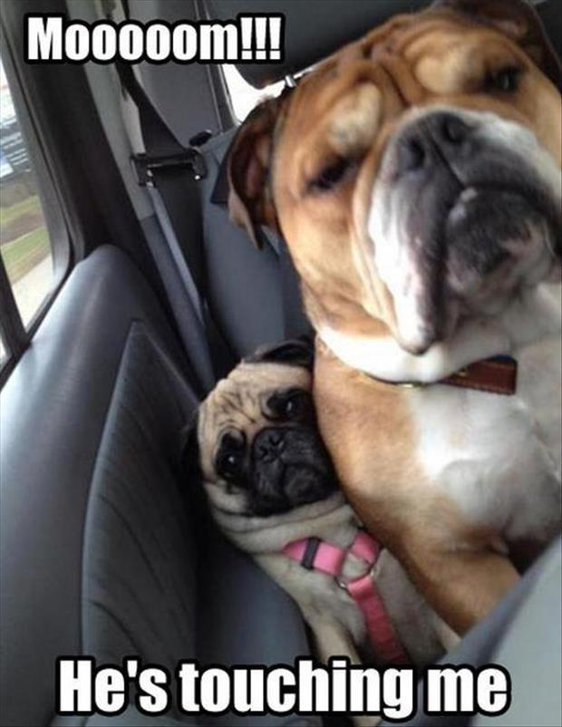 funny dogs in the back seat