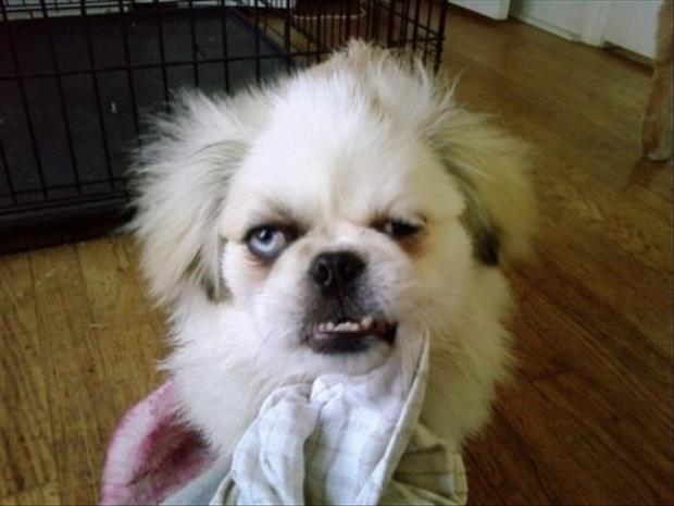 funny dogs monday faces (1)