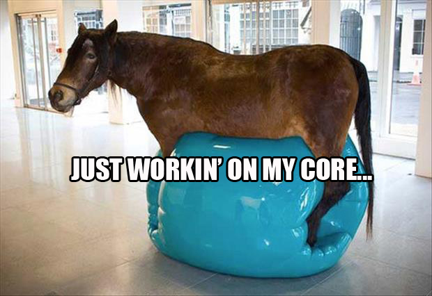 funny horse is tonning his core with an exercise ball