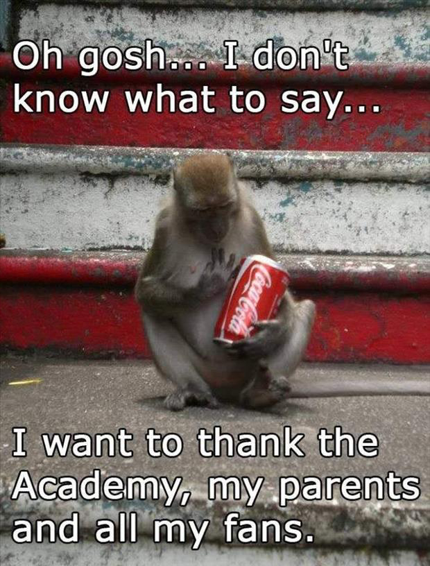 Funny Memes To Say Thank You : Funny monkey dump a day