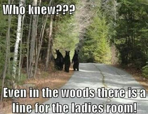 funny pictures bears in the woods