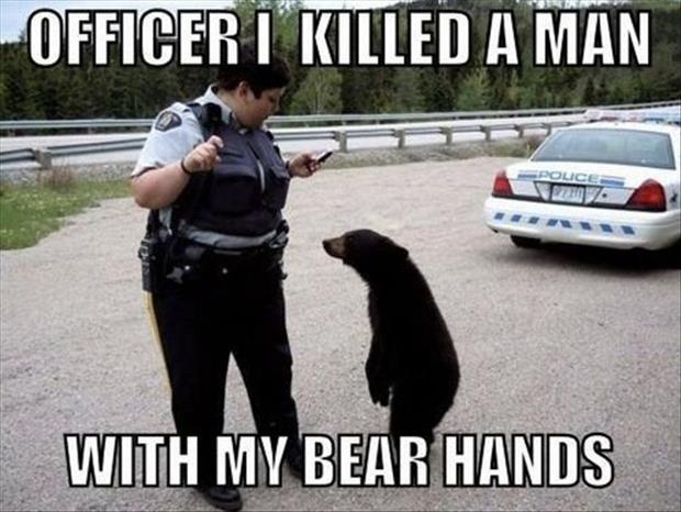 funny pictures bears
