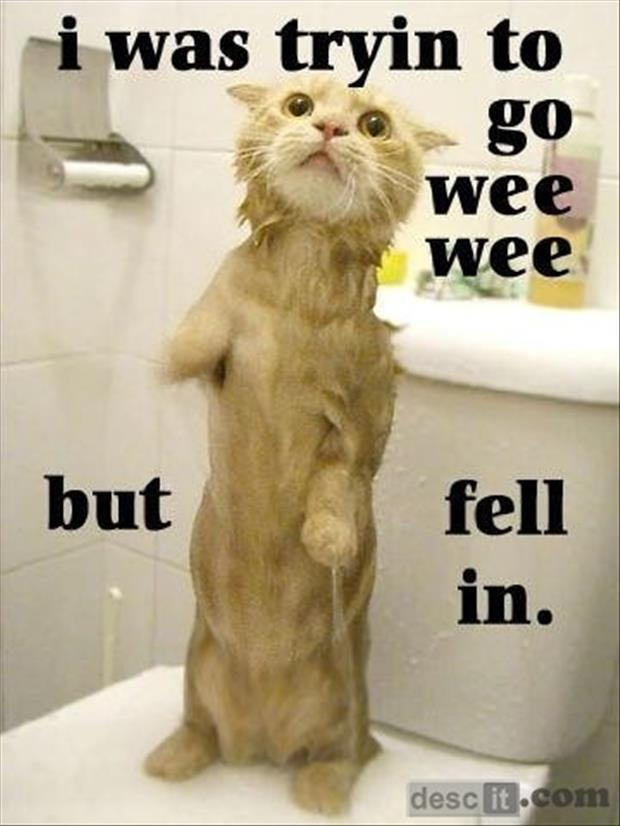 funny pictures cat falls in the toilet