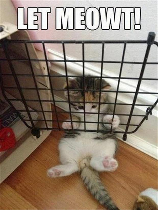 funny pictures cat in carrier