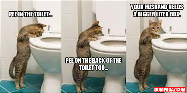 funny pictures cat looks in the toilet