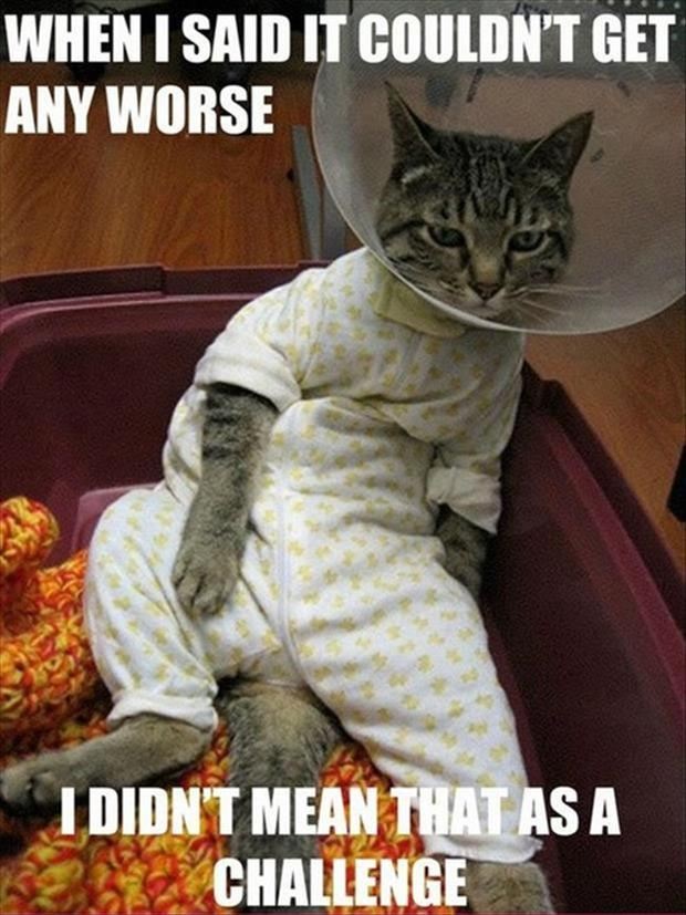 funny pictures cone on a cat
